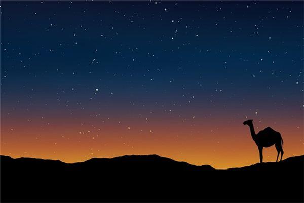 梦见单峰骆驼是什么意思